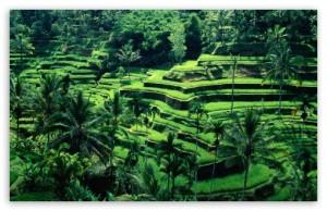 bali_indonesia-t2
